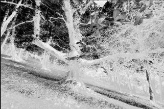 Equilibra objetivamente la saturación de tus imágenes usando el Panel Tony Kuyper