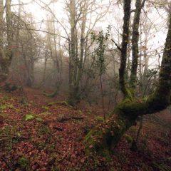 Aprende el secreto para un revelado de un bosque místico.
